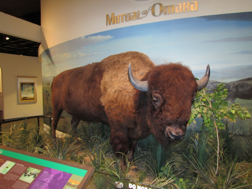a-buffalo-at-the-durham-museum-in-omaha-nebraska