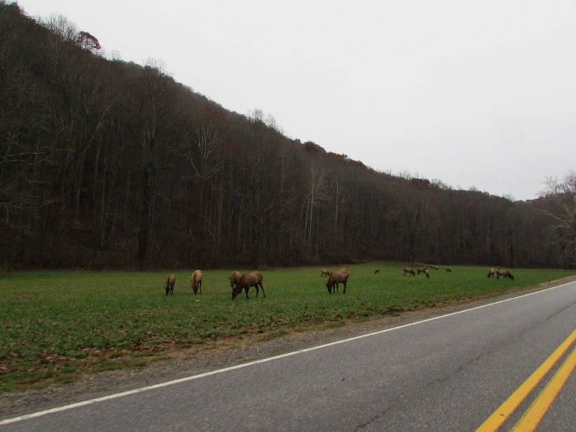 Field of Elk GSMNP